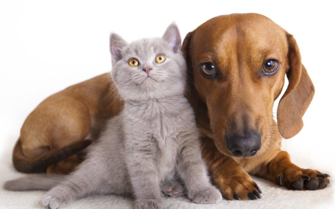 Esperti dell'alimentazione di cane e gatti